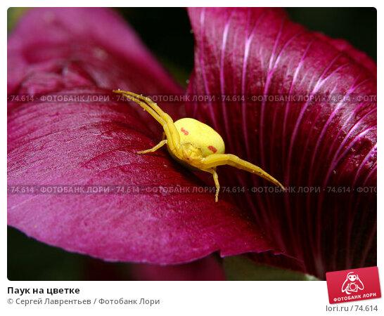 Паук на цветке, фото № 74614, снято 21 августа 2007 г. (c) Сергей Лаврентьев / Фотобанк Лори