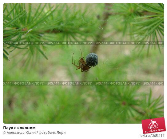 Купить «Паук с коконом», фото № 205114, снято 1 июля 2007 г. (c) Александр Юдин / Фотобанк Лори