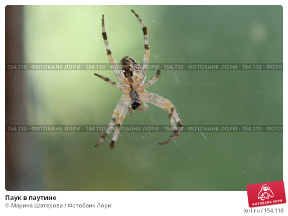 Паук в паутине, фото № 154110, снято 21 августа 2007 г. (c) Марина Шатерова / Фотобанк Лори