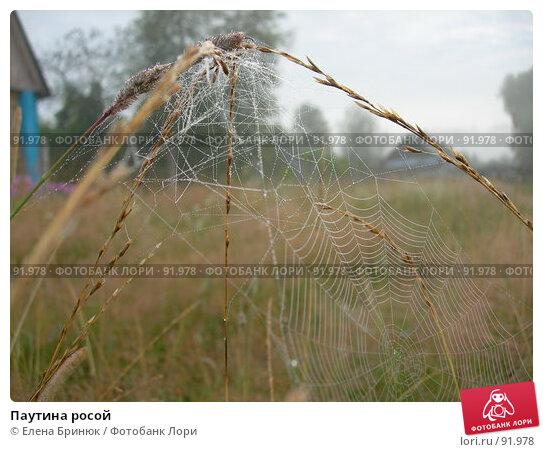 Паутина росой, фото № 91978, снято 21 июля 2007 г. (c) Елена Бринюк / Фотобанк Лори