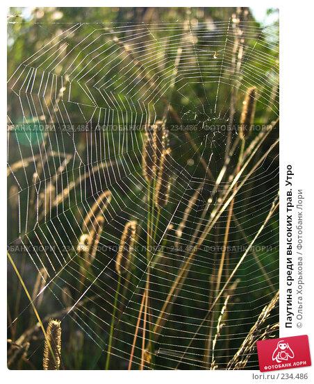 Купить «Паутина среди высоких трав. Утро», фото № 234486, снято 8 августа 2007 г. (c) Ольга Хорькова / Фотобанк Лори