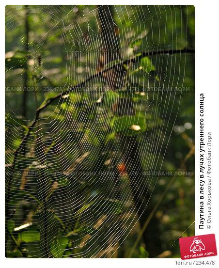 Паутина в лесу в лучах утреннего солнца, фото № 234478, снято 7 августа 2007 г. (c) Ольга Хорькова / Фотобанк Лори