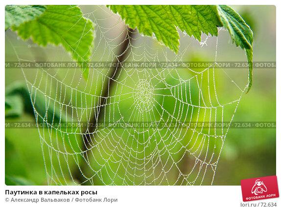 Паутинка в капельках росы, фото № 72634, снято 16 июня 2007 г. (c) Александр Вальваков / Фотобанк Лори