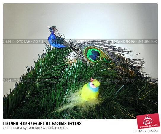 Купить «Павлин и канарейка на еловых ветвях», фото № 143354, снято 23 марта 2018 г. (c) Светлана Кучинская / Фотобанк Лори