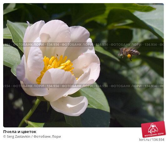 Купить «Пчела и цветок», фото № 134934, снято 11 июня 2004 г. (c) Serg Zastavkin / Фотобанк Лори
