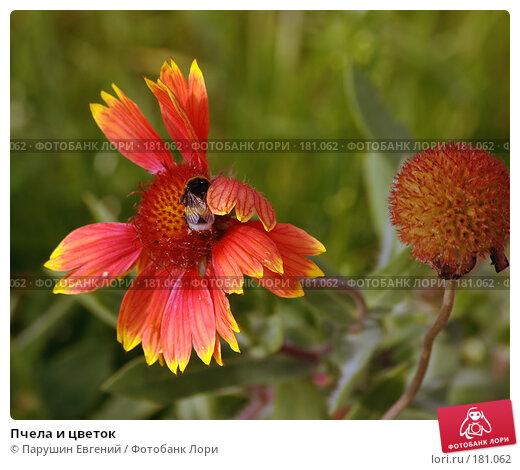 Пчела и цветок, фото № 181062, снято 21 июля 2017 г. (c) Парушин Евгений / Фотобанк Лори