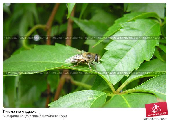 Пчела на отдыхе, фото № 155058, снято 9 сентября 2006 г. (c) Марина Бандуркина / Фотобанк Лори