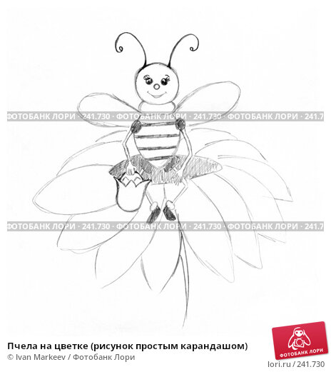 Пчела на цветке (рисунок простым карандашом), иллюстрация № 241730 (c) Василий Каргандюм / Фотобанк Лори