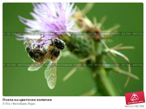 Купить «Пчела на цветочке колючке», фото № 82154, снято 26 апреля 2018 г. (c) Fro / Фотобанк Лори