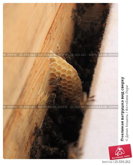 Пчелиная ватрушка вид сверху. Стоковое фото, фотограф Денис Кошель / Фотобанк Лори