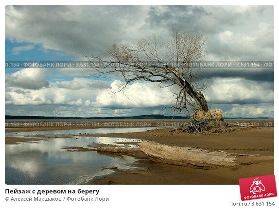 Пейзаж с деревом на берегу. Стоковое фото, фотограф Алексей Макшаков / Фотобанк Лори