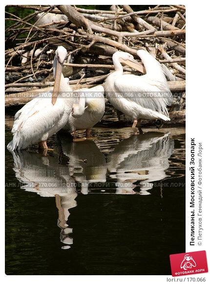 Пеликаны. Московский Зоопарк, фото № 170066, снято 24 июня 2007 г. (c) Петухов Геннадий / Фотобанк Лори