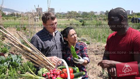 People gardeners chatting at table with harvest after harvesting at farmland. Стоковое видео, видеограф Яков Филимонов / Фотобанк Лори