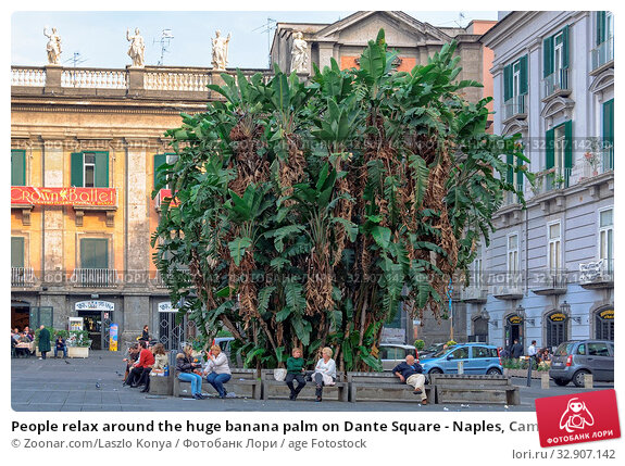 People relax around the huge banana palm on Dante Square - Naples, Campania, Italy. Стоковое фото, фотограф Zoonar.com/Laszlo Konya / age Fotostock / Фотобанк Лори