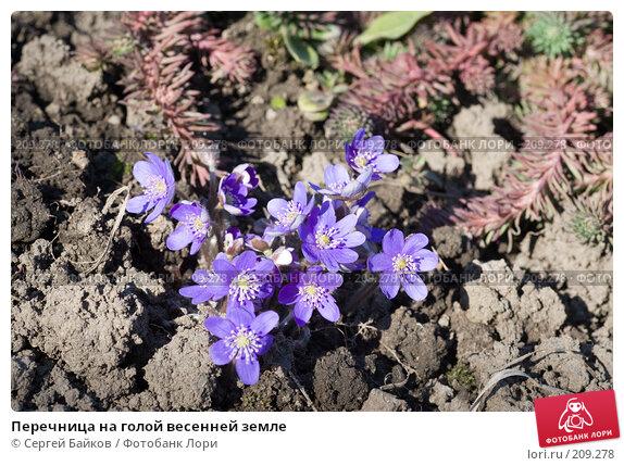Перечница на голой весенней земле, фото № 209278, снято 1 апреля 2007 г. (c) Сергей Байков / Фотобанк Лори