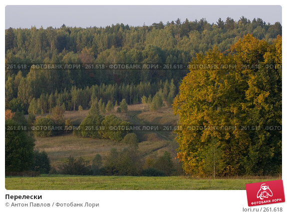 Перелески, фото № 261618, снято 25 сентября 2007 г. (c) Антон Павлов / Фотобанк Лори