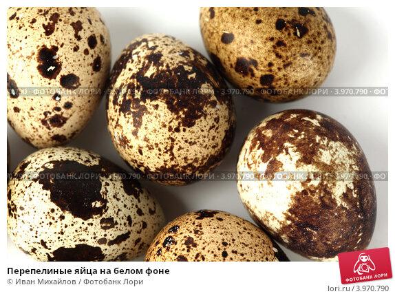 Купить «Перепелиные яйца на белом фоне», фото № 3970790, снято 17 июня 2009 г. (c) Иван Михайлов / Фотобанк Лори