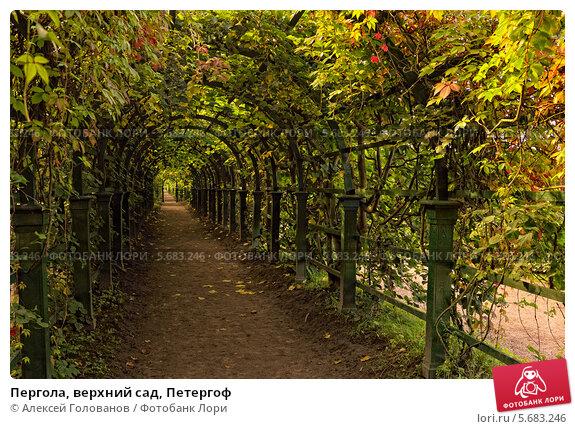 Купить «Пергола, верхний сад, Петергоф», фото № 5683246, снято 26 августа 2011 г. (c) Алексей Голованов / Фотобанк Лори