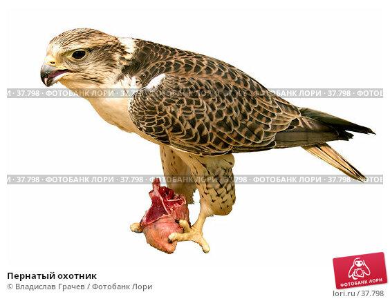 Купить «Пернатый охотник», фото № 37798, снято 20 мая 2005 г. (c) Владислав Грачев / Фотобанк Лори