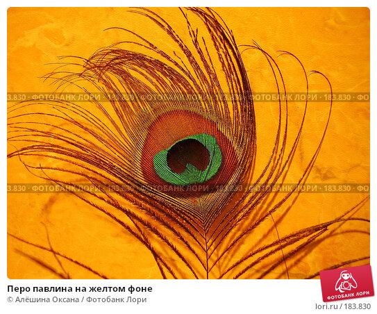 Перо павлина на желтом фоне, эксклюзивное фото № 183830, снято 29 ноября 2007 г. (c) Алёшина Оксана / Фотобанк Лори