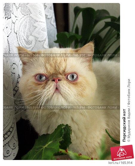 Персидский кот, фото № 165914, снято 23 марта 2005 г. (c) Мударисов Вадим / Фотобанк Лори