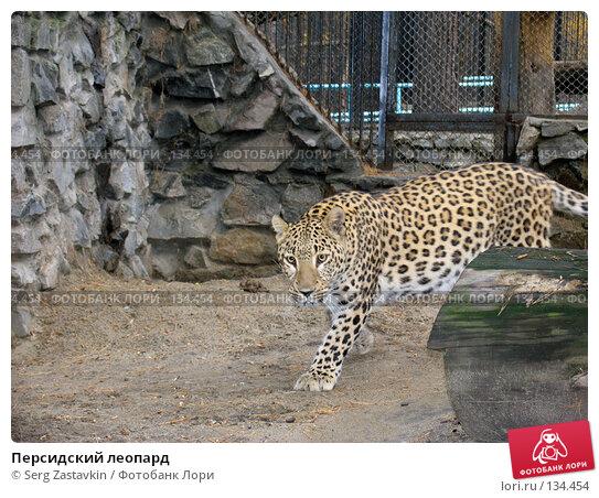 Купить «Персидский леопард», фото № 134454, снято 10 октября 2004 г. (c) Serg Zastavkin / Фотобанк Лори
