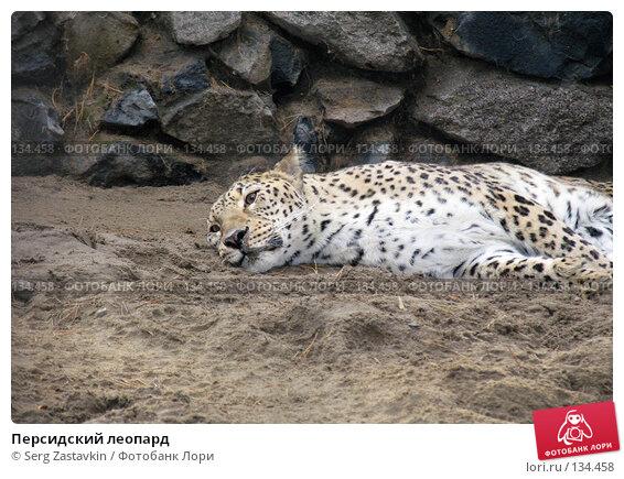Персидский леопард, фото № 134458, снято 10 октября 2004 г. (c) Serg Zastavkin / Фотобанк Лори