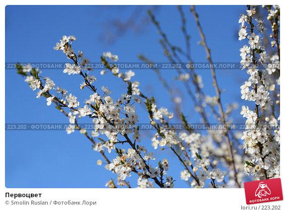 Купить «Первоцвет», фото № 223202, снято 15 апреля 2007 г. (c) Smolin Ruslan / Фотобанк Лори