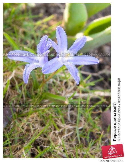 Первые цветы (soft), фото № 245170, снято 26 июня 2017 г. (c) Светлана Кучинская / Фотобанк Лори