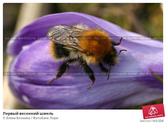 Первый весенний шмель, фото № 163554, снято 31 марта 2007 г. (c) Елена Блохина / Фотобанк Лори