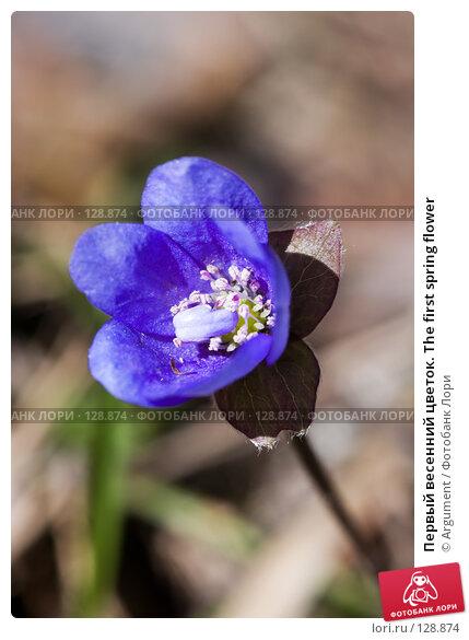 Купить «Первый весенний цветок. The first spring flower», фото № 128874, снято 1 мая 2007 г. (c) Argument / Фотобанк Лори