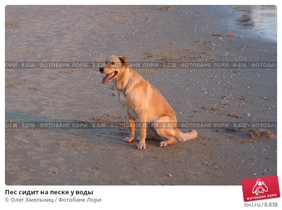 Купить «Пес сидит на песке у воды», фото № 8838, снято 11 июля 2006 г. (c) Олег Хмельниц / Фотобанк Лори