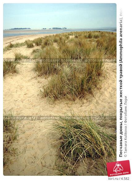 Песчаные дюны, покрытые жесткой травой (Ammophila arenaria), полоска моря вдалеке, фото № 4582, снято 15 апреля 2006 г. (c) Tamara Kulikova / Фотобанк Лори