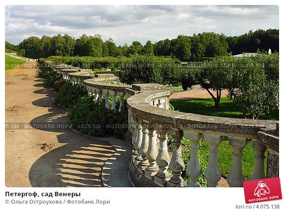 Купить «Петергоф, сад Венеры», фото № 4075138, снято 15 августа 2012 г. (c) Ольга Остроухова / Фотобанк Лори