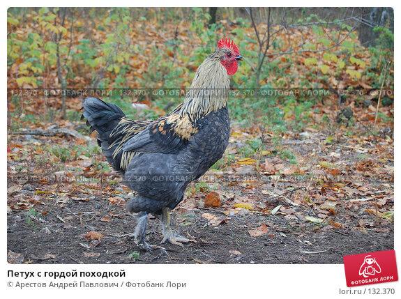 Петух с гордой походкой, фото № 132370, снято 5 ноября 2007 г. (c) Арестов Андрей Павлович / Фотобанк Лори