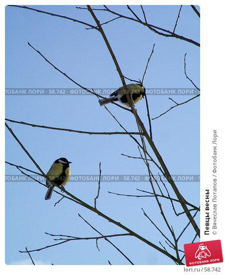 Певцы весны, фото № 58742, снято 24 февраля 2007 г. (c) Вячеслав Потапов / Фотобанк Лори