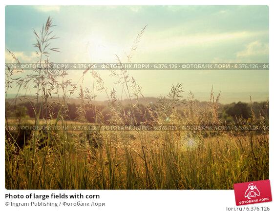 Купить «Photo of large fields with corn», фото № 6376126, снято 26 июня 2019 г. (c) Ingram Publishing / Фотобанк Лори