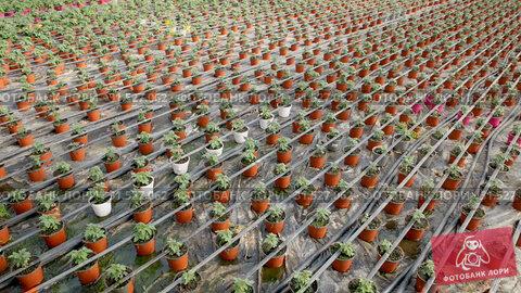 Купить «Picture of seedlings of tomatoes growing in pots in greenhouse, nobody», видеоролик № 31527062, снято 26 апреля 2019 г. (c) Яков Филимонов / Фотобанк Лори