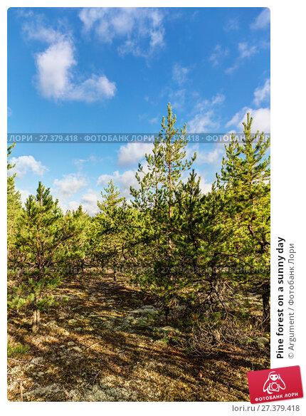 Купить «Pine forest on a sunny day», фото № 27379418, снято 5 сентября 2014 г. (c) Argument / Фотобанк Лори