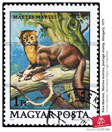 Pine Marten, Martes martes, postage stamp, Hungary, 1979. (2014 год). Редакционное фото, фотограф Ivan Vdovin / age Fotostock / Фотобанк Лори