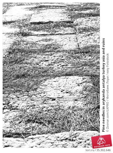 Pine needles in arykanda antalya turkey asia and ruins. Стоковое фото, фотограф Zoonar.com/LKPRO / easy Fotostock / Фотобанк Лори