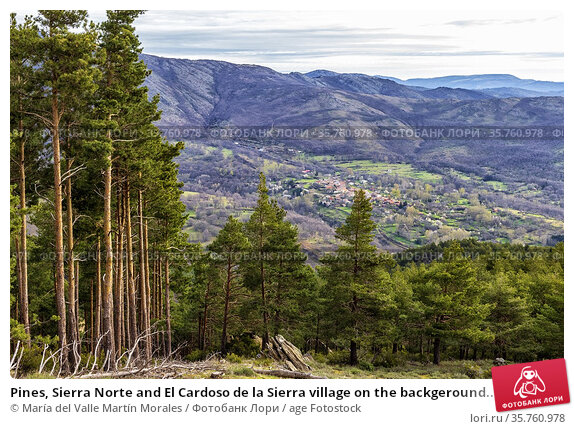 Pines, Sierra Norte and El Cardoso de la Sierra village on the backgeround... Стоковое фото, фотограф María del Valle Martín Morales / age Fotostock / Фотобанк Лори