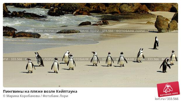 Купить «Пингвины на пляже возле Кейптауна», фото № 333566, снято 16 февраля 2008 г. (c) Марина Коробанова / Фотобанк Лори