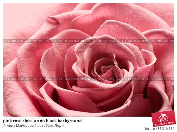 pink rose close up on black background. Стоковое фото, фотограф Анна Майорова / Фотобанк Лори