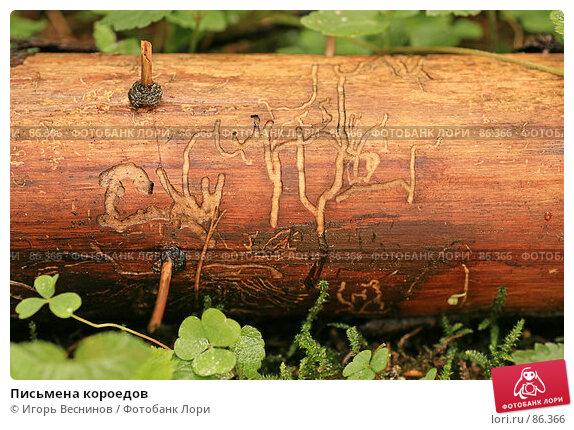 Письмена короедов, фото № 86366, снято 15 сентября 2007 г. (c) Игорь Веснинов / Фотобанк Лори