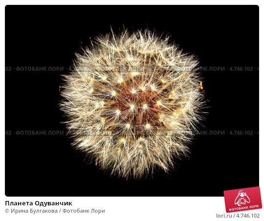 Планета Одуванчик. Стоковое фото, фотограф Ирина Булгакова / Фотобанк Лори
