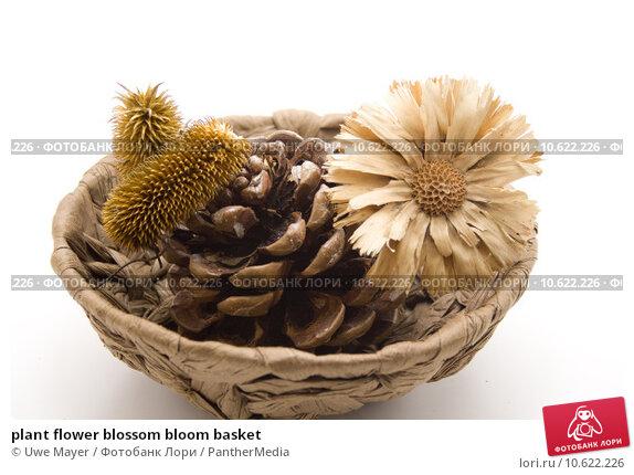 plant flower blossom bloom basket. Стоковое фото, фотограф Uwe Mayer / PantherMedia / Фотобанк Лори