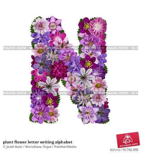 N Vector Flower Font Letter  shutterstockcom
