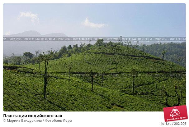 Плантации индийского чая, фото № 202206, снято 16 ноября 2005 г. (c) Марина Бандуркина / Фотобанк Лори