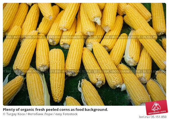Plenty of organic fresh peeled corns as food background. Стоковое фото, фотограф Turgay Koca / easy Fotostock / Фотобанк Лори